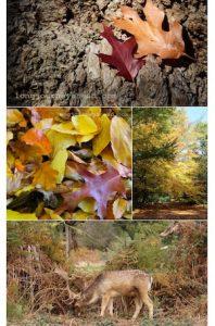 richmond-park-autumn-thumb