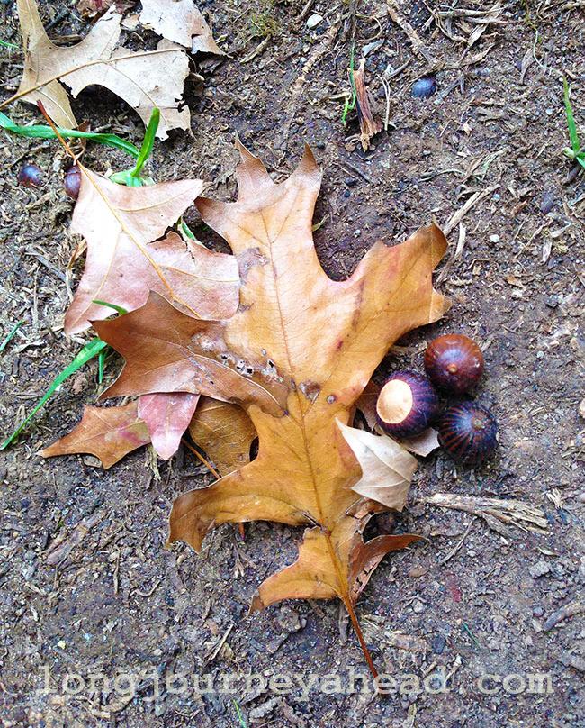 autumnwm