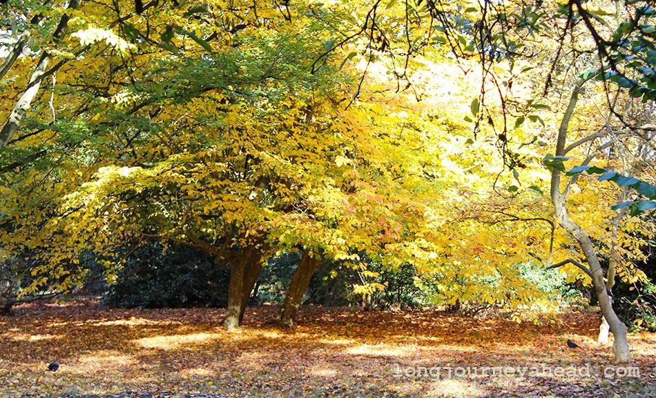autumn-foliage-wm