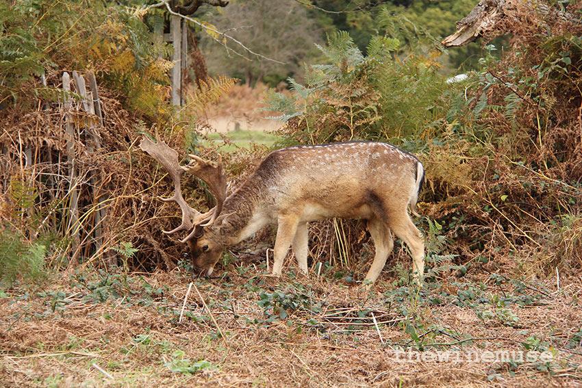 deer-wm