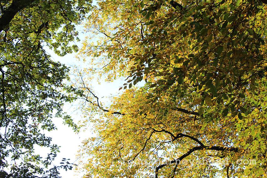 leaves-2-wm