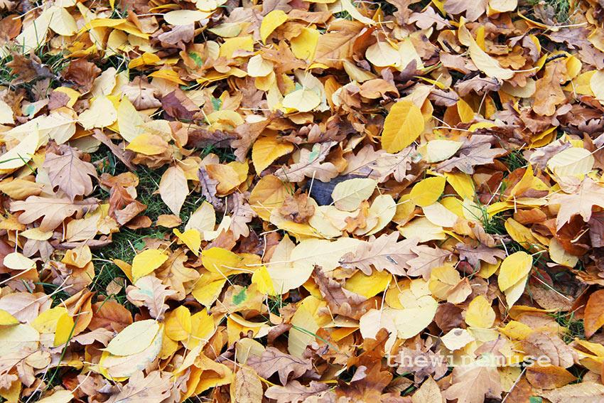 leaves-wm